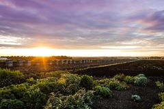 Summer sunset over farm and wooden crates for onions royalty free stock images