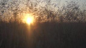 Summer sunset over field stock video footage