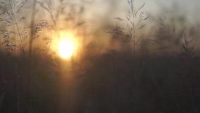 Summer sunset over field stock footage