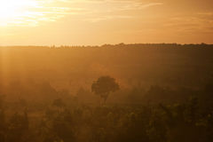 Summer sunset over a forest in Vietnam. Summer sunset over a forest Royalty Free Stock Image