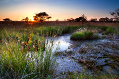 Summer sunset over swamp Stock Photography