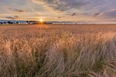 Summer sunset over wheat field Royalty Free Stock Photos