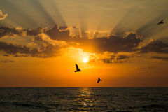 Summer sunset. Sunset at Sevastopol. Gulls are flying in sun rays Royalty Free Stock Images