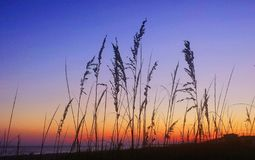 Summer Sunset. Wheat on Caswell Beach in Oak Isle, North Carolina Royalty Free Stock Photography