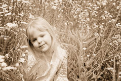 Summer Sunshine Royalty Free Stock Image