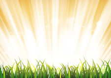 Summer Sunshine Background With Grass Leaves Royalty Free Stock Photography