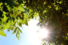 Summer Sunshine through Trees. Warm summer day, with bright sunshine glimmering through the green leaves. Alberta, Canada nature Stock Image