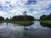 Summer in the swamps. Autumn day in the swamps of florida Royalty Free Stock Photography