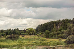 Summer swampy forest landscape with cloudy sky Stock Image