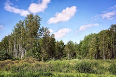 Summer swampy forest landscape with cloudy sky Stock Photos