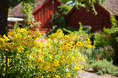 Summer in Sweden Royalty Free Stock Photo