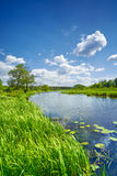 Summer sweet flag river landscape blue sky clouds countryside Stock Photos