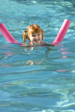 Summer Swimming Fun Stock Image