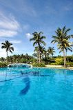 Summer Swimming Pool. Surrounded by coconut trees Stock Images