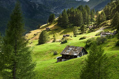 Summer Swiss alpine wiew Stock Image