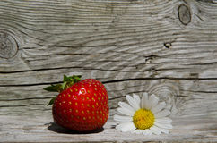 Summer symbols - strawberry and daisy flower Stock Photography