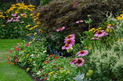 Summer Symphony. Close up, ground level view of a summer garden filled with colorful flowers Stock Image