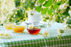 Summer tea with honey under the jasmine bush. Three bowls of honey and cup of tea on the table under the jasmine bush Royalty Free Stock Image