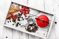 Summer tea tea with berries Stock Photos