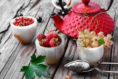 Summer tea tea with berries Stock Image