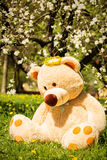 Summer teddy bear Royalty Free Stock Images