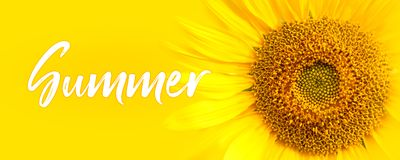 Free Summer Text And Sunflower Close-up Details. Oncept For Summer, Sun, Sunshine, Tropical Summer Travel And Hot Days. Royalty Free Stock Photo - 117406005