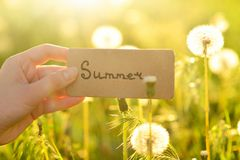 Summer text on a card. Girl holding card in a field stock image