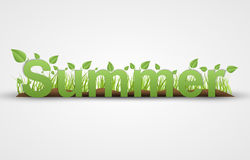 Summer text with green leaves on a white background Stock Photo