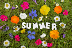 Summer text  meadow Royalty Free Stock Photography