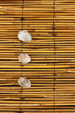 Summer texture. Three seashells on bamboo texture Royalty Free Stock Photos