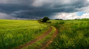 Summer thunderstorm in a wheat field royalty free stock image