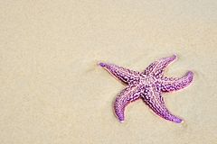 Summer time. Russia. Sea reserve. A starfish laying on a sand beach Royalty Free Stock Photos