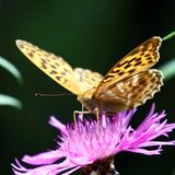 Summer is the time of butterflies. A beautiful insect drinks nectar from a flower. stock photography