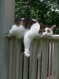 Summer time..Cat relaxing on the rail Stock Images