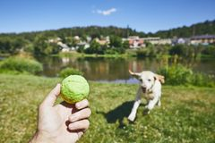 Summer time with dog in countryside Stock Image