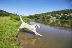Summer time with dog in countryside Royalty Free Stock Photos