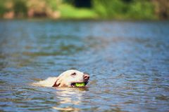 Summer time with dog Royalty Free Stock Photo
