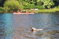 Summer time with dog Stock Photography