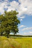 Summer time, grassland and fields Stock Photos