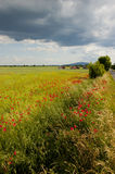 Summer time, grassland and fields Stock Photography