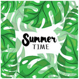 Summer time. Modern tropical background design with greed monstera leaves. Vector. Illustrated Royalty Free Stock Photos