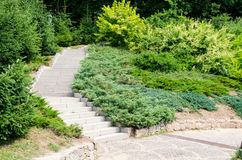 Summer time step way in the garden Stock Photography