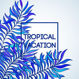Summer time. Vector illustration of tropical palm Royalty Free Stock Photos
