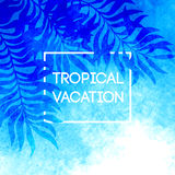 Summer time. Vector illustration of tropical palm Royalty Free Stock Photography