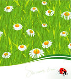 Summer time. Vector template. Royalty Free Stock Image