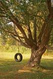 Summer Tire Swing Stock Image