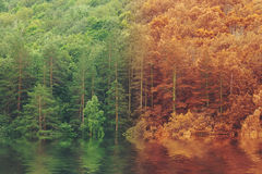 Summer to autumn fall forest reflected on lake Stock Photography