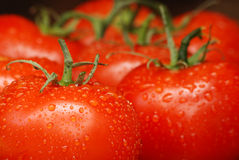 Summer Tomatoes Royalty Free Stock Photography