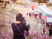 Summer travel concept from front side of asian woman traveler an. D photographer with long black hair during take photo to flower field and people with sunny and Royalty Free Stock Images