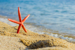 Summer Travel Destination Starfish on the Beach Royalty Free Stock Photos